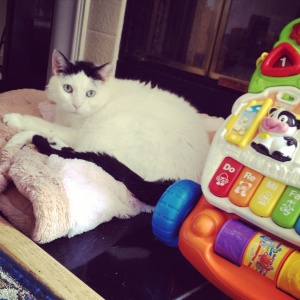 Sabi found a comfy spot amongst his sister's toys! :)