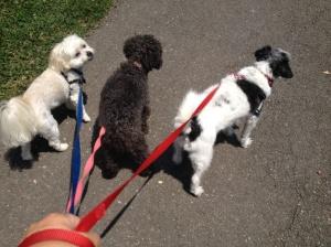 Butch, Gidget & Bob